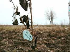 Adopta un copac